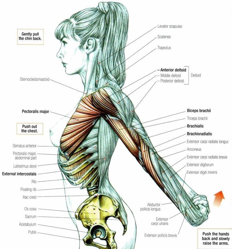 Лечебная физкультура в клинике остеопатии